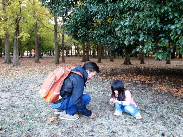 /どんぐり拾いをする女の子と父親