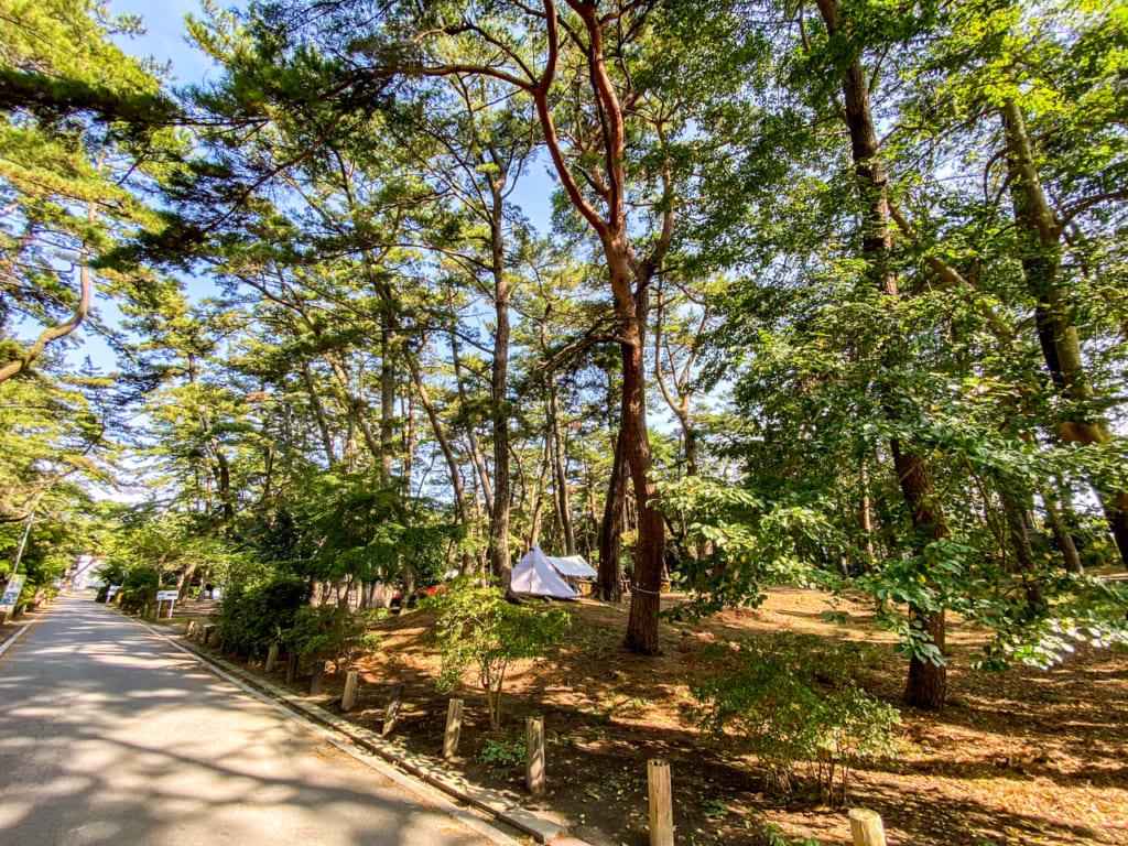 /キャンプ場入口から管理棟までの道右側-1024x768