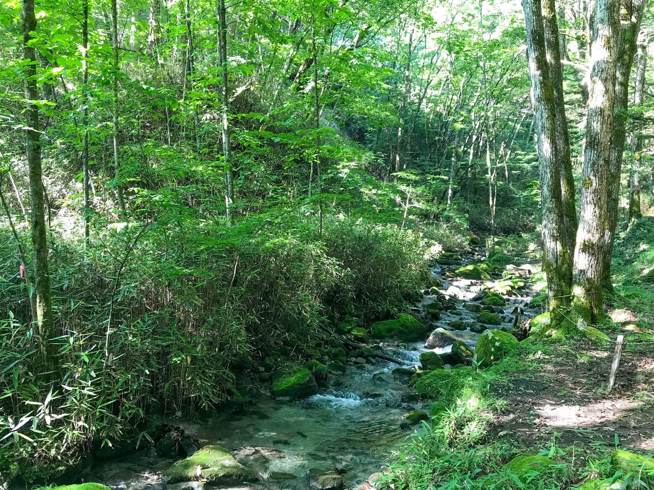 /キャンプ場内の穏やかな渓流