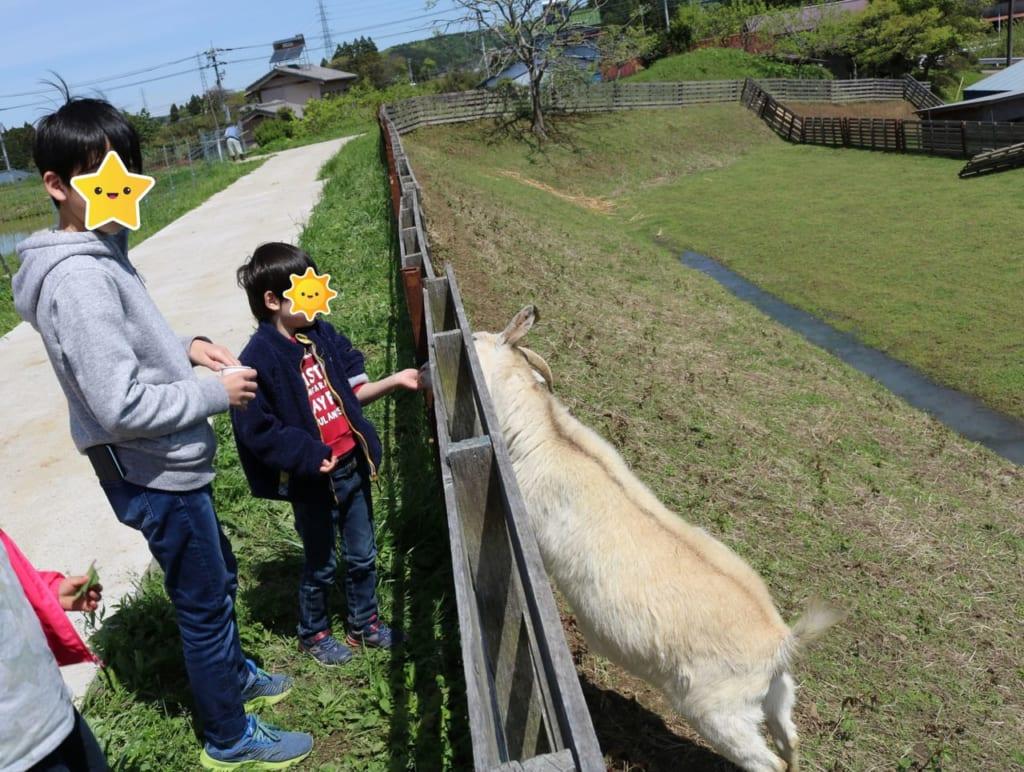 /ヤギ牧場でヤギと遊ぶ子供-1024x772