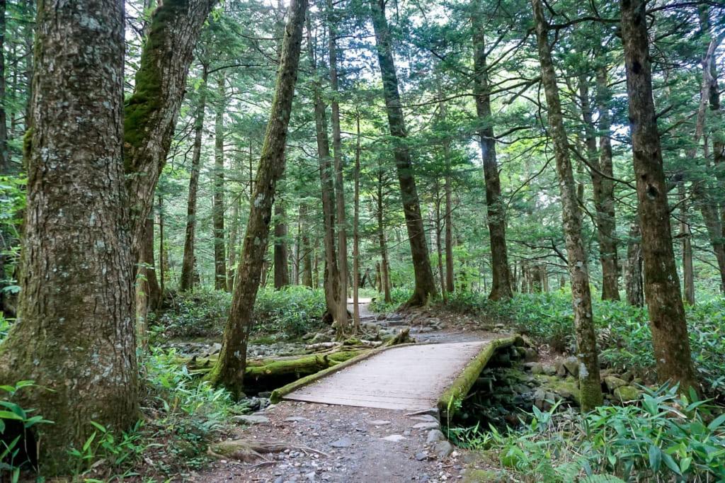 /上高地の湿地帯と森-1024x682