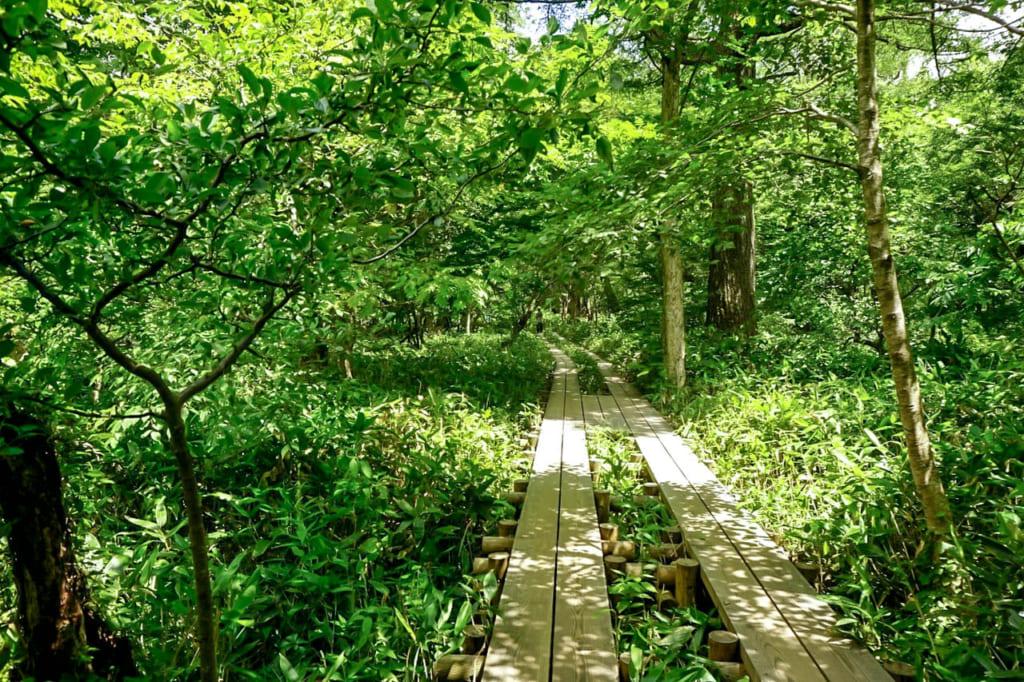 /上高地の湿地帯に整備された遊歩道-1024x682
