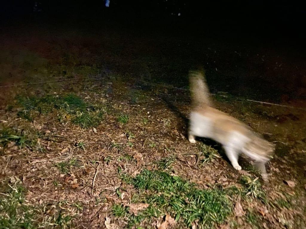 /動きが早くてカメラで捉えきれない-e1575869982443-1024x768