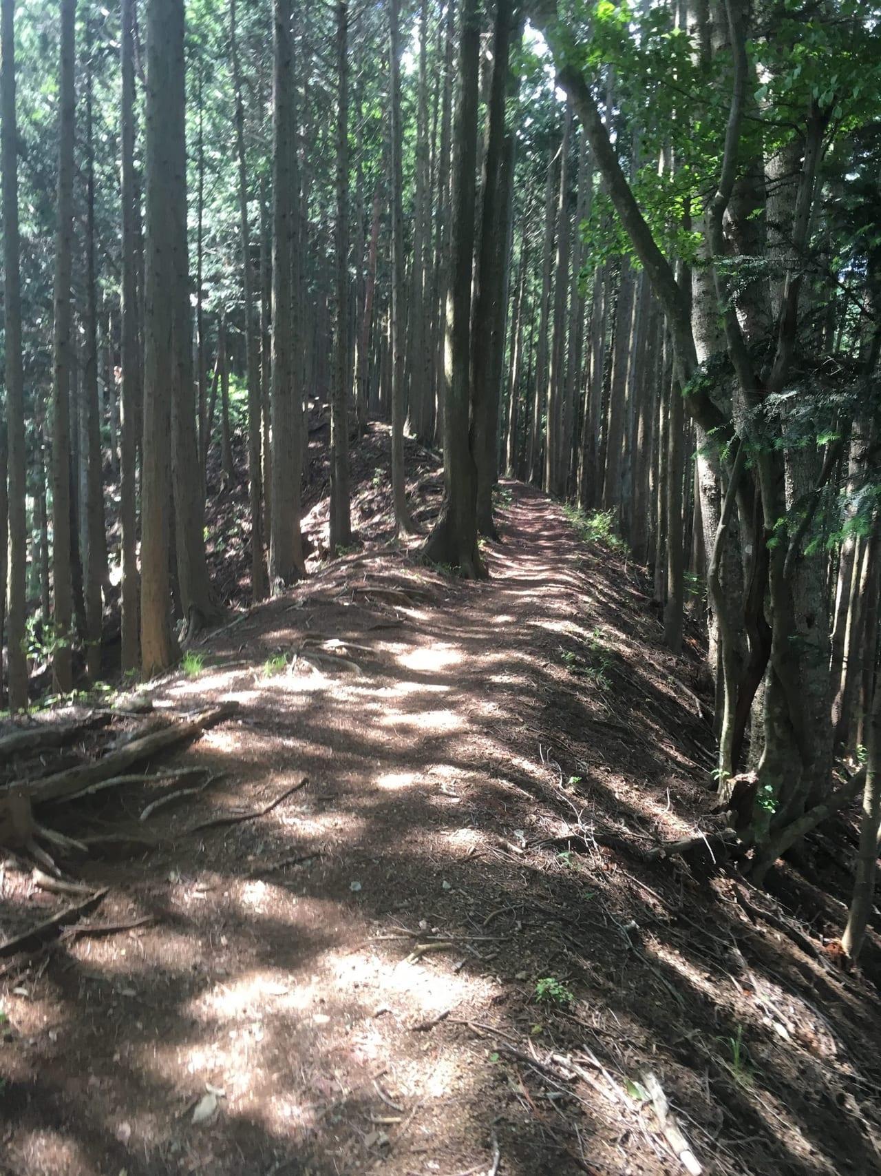 /木々が連なる三頭山の尾根道