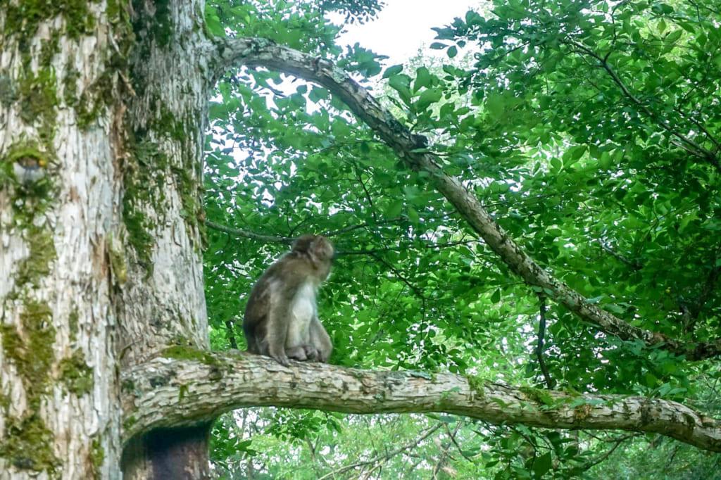/木の上で見張りをしているサル-1024x682
