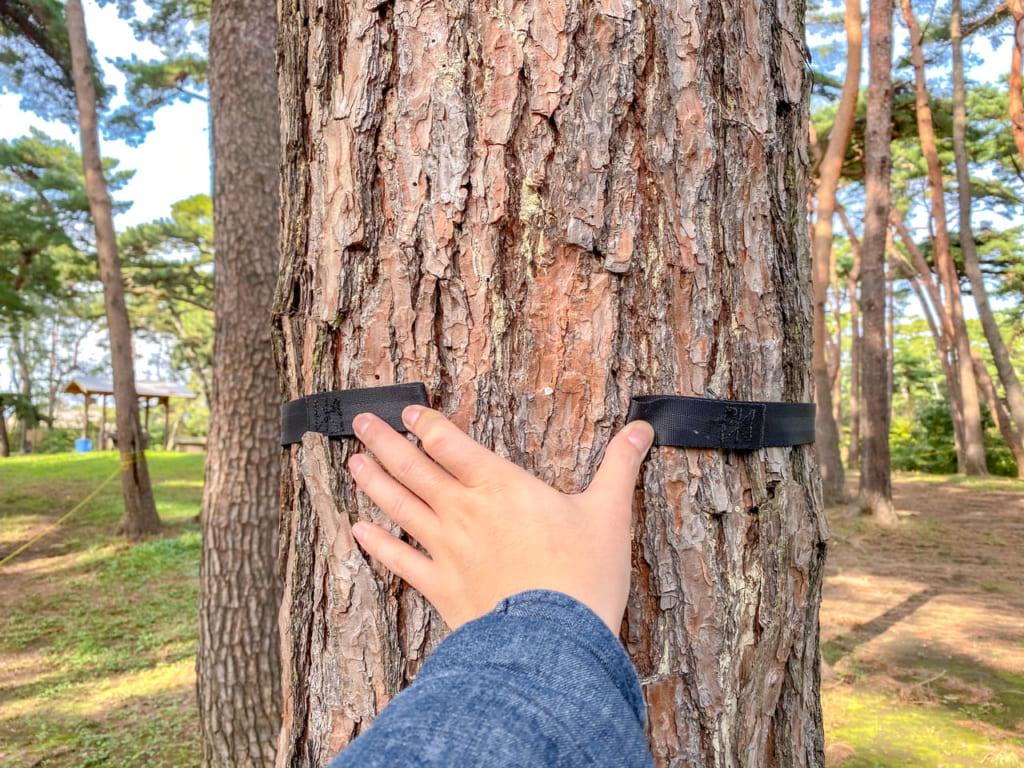 /松の木が太くてツリーハガーの長さが足りない-1024x768