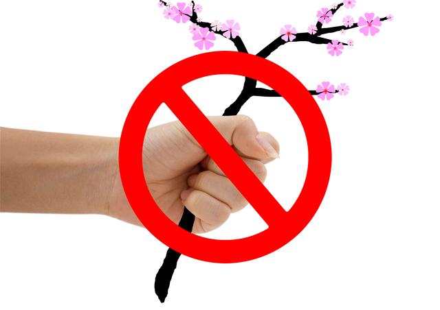 /桜の警告