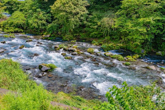 /植物が良く生える渓流沿いの風景