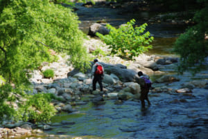 山菜の採れる場所 山、森、渓流の歩き方