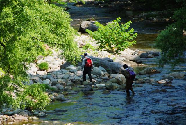 山菜の採れる場所|山、森、渓流の歩き方