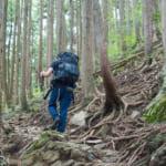 山菜採りのルールとマナー|山への入り方