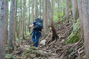 山菜採りのルールとマナー 山への入り方