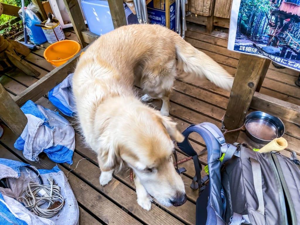 /管理棟にいる白い犬-1024x768
