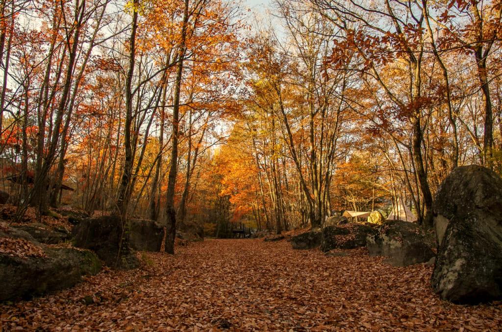 紅葉が映える秋が狙い目!日本庭園のように美しい南アルプス三景園オートキャンプ場