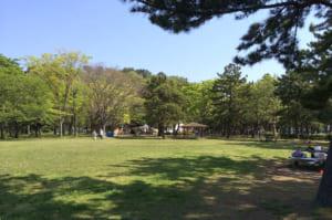 芝生野島公園キャンプ場の芝生サイト
