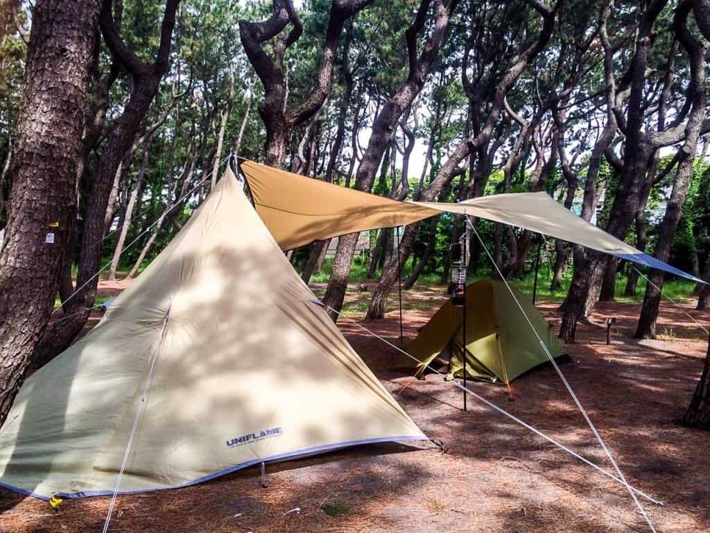 茅ヶ崎柳島キャンプ場の林間サイト
