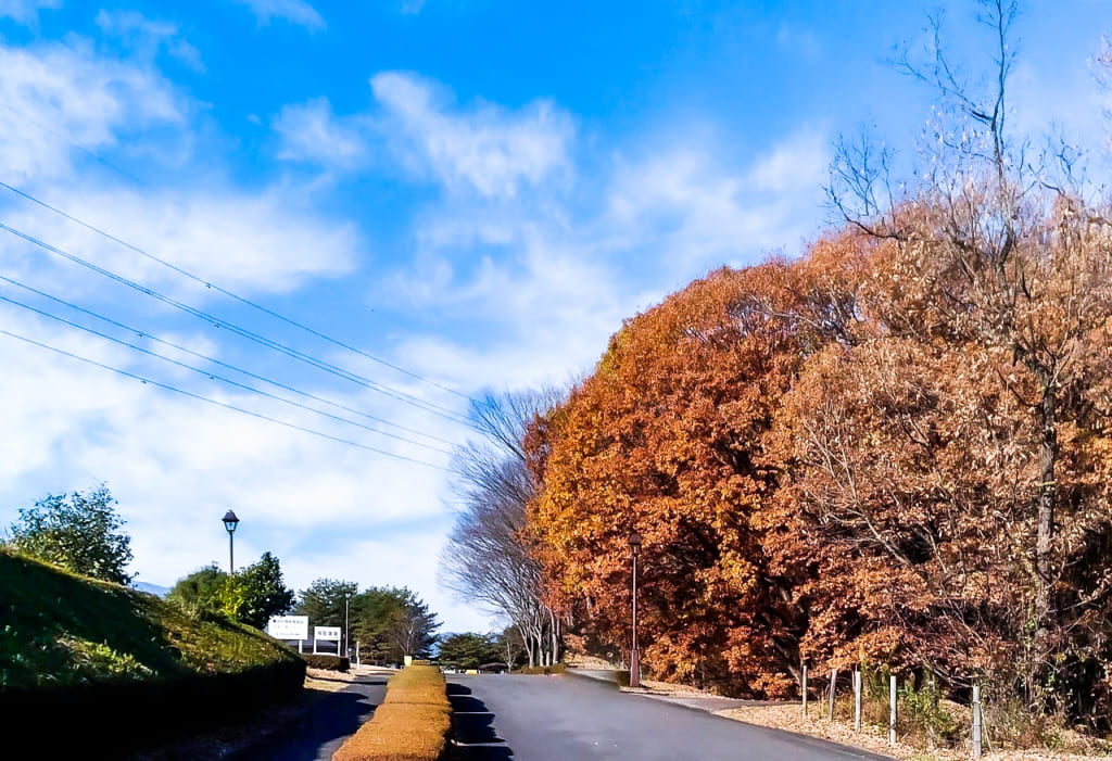 /那須野が原公園オートキャンプ場の綺麗な紅葉-1024x701