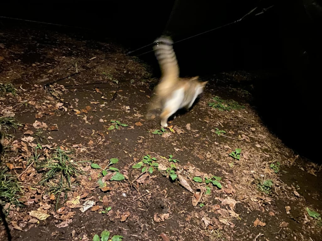 /闇の中へ逃げていく野生動物-1-e1575873888602-1024x768