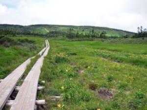 高層湿原と木道