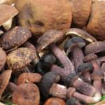 【キノコの判別方法】食べられるキノコと毒キノコの見分け方