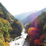 【東京最後の秘境】氷川キャンプ場の過ごし方