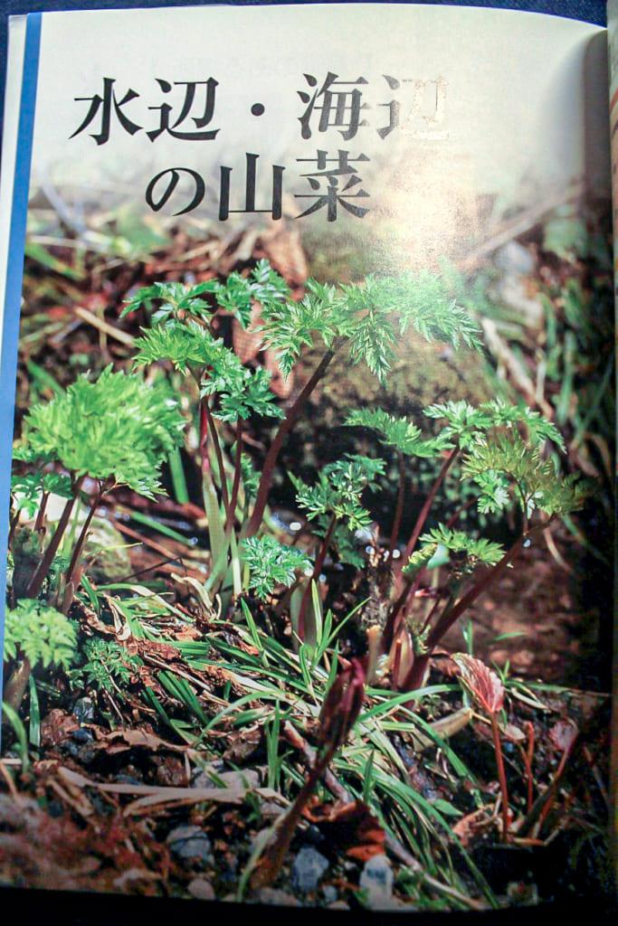 よくわかる山菜大図鑑ー253ページ-683x1024