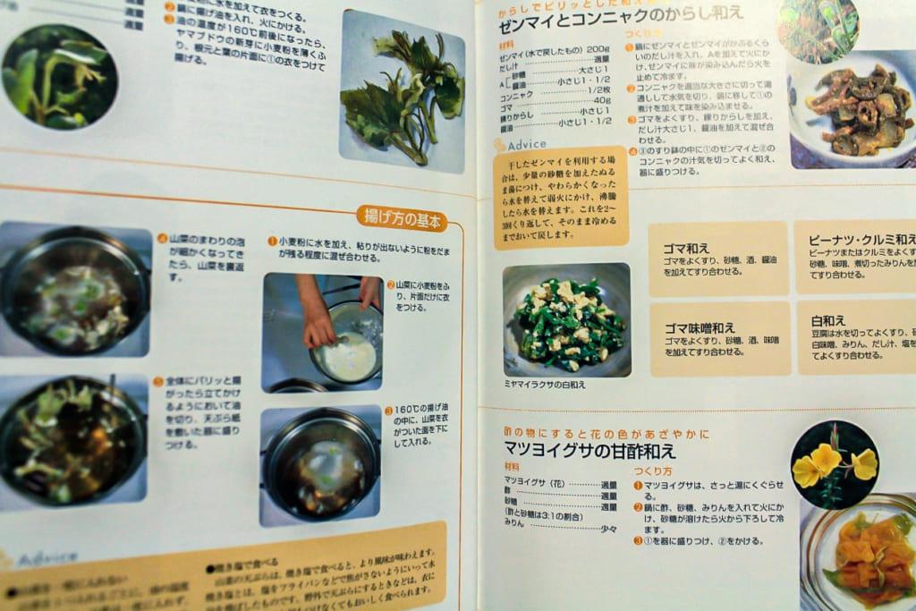 よくわかる山菜大図鑑ー356357ページ-1024x683