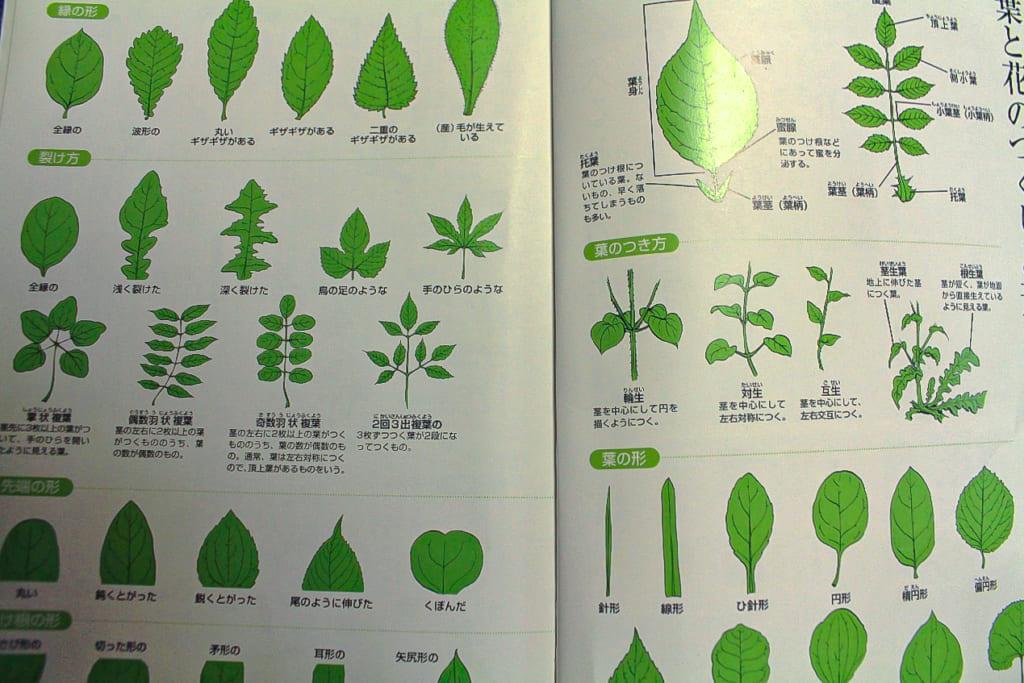 よくわかる山菜大図鑑ー45ページ-1024x683