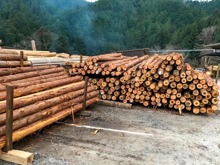 キャンプ場に積まれた大量の材木