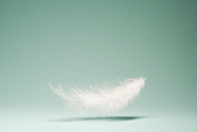 ダウン(羽毛)イメージ