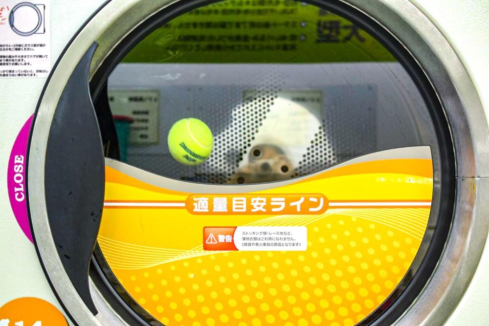 乾燥機にテニスボールを入れて乾燥させる