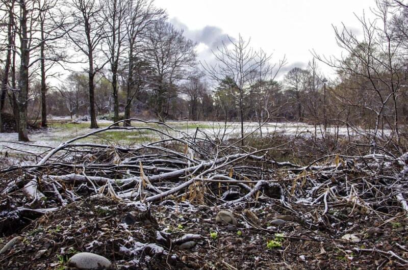 冬の枯れた倒木に雪が積もる