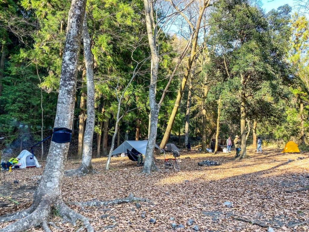 土曜日の林間フリーサイトの様子-1024x768
