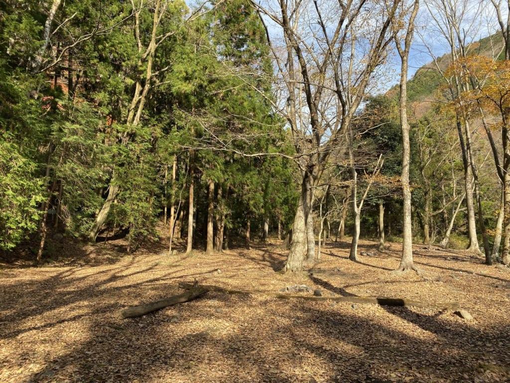 日曜日の林間フリーサイトの様子-1-e1577441271568-1024x768