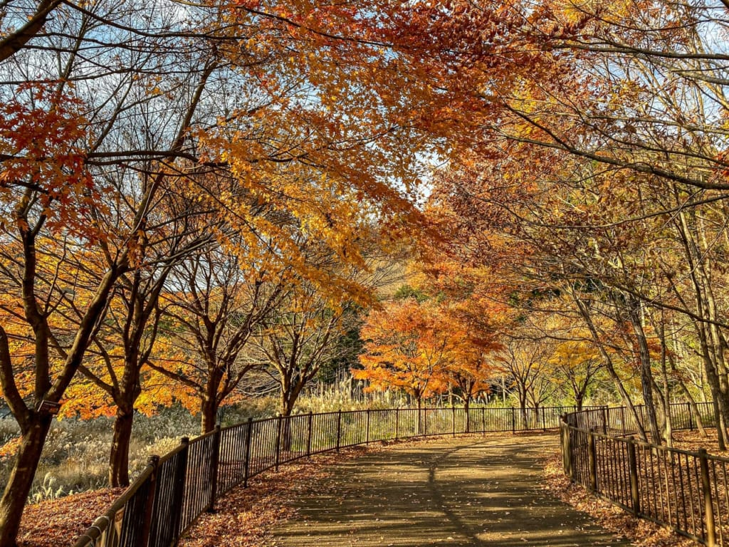 秦野戸川公園の紅葉1-1024x768