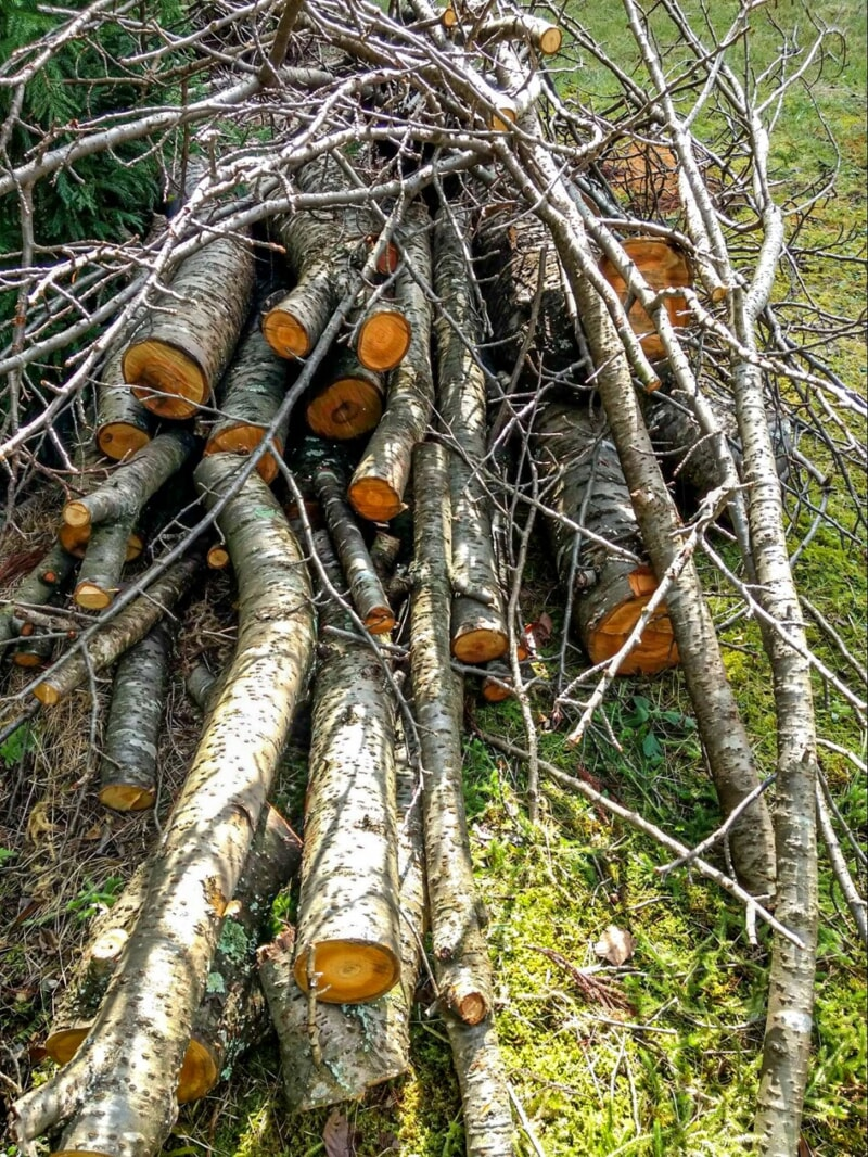 近所の山に捨てられていた桜の原木