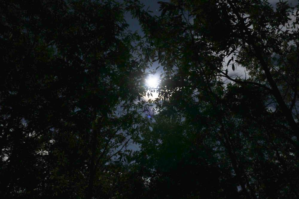 7823-夜と月