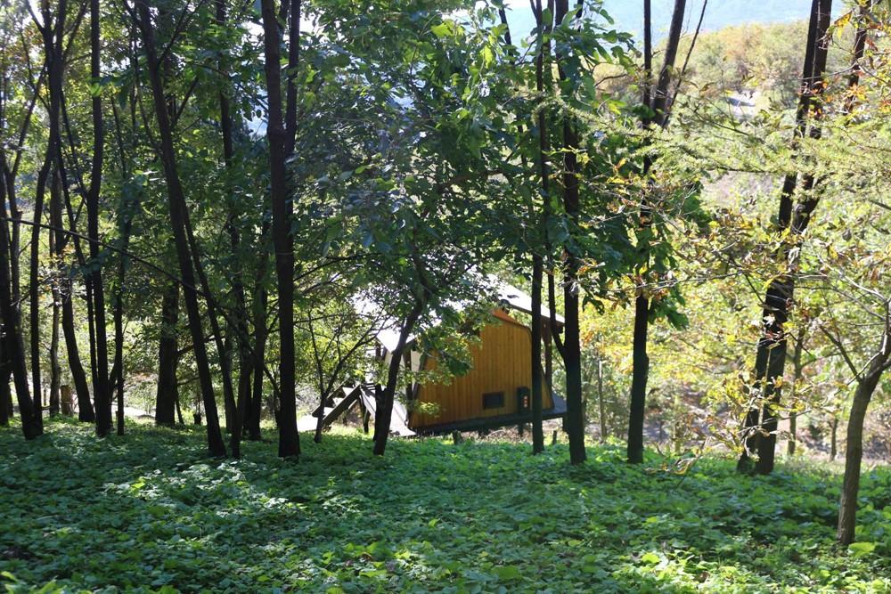 7823-東の高台エリアの常設テントの後ろ