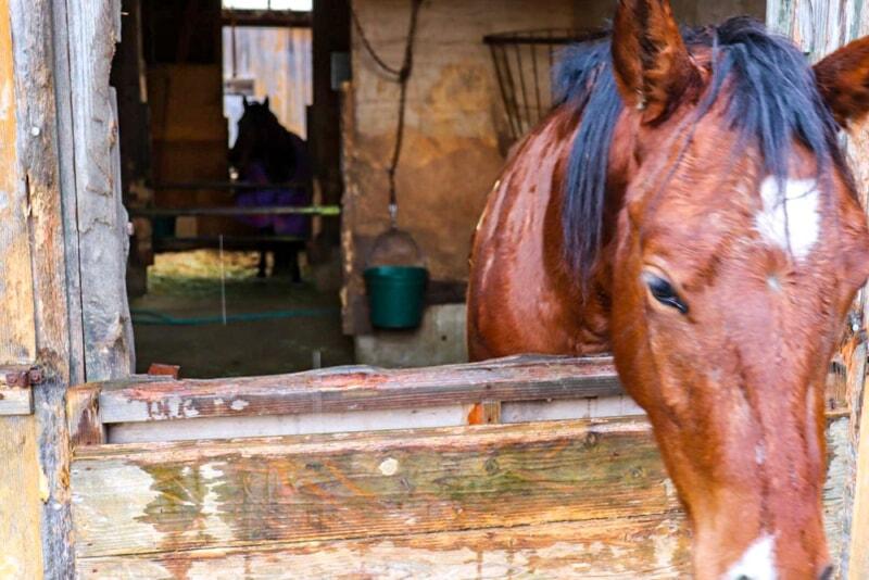 N.A.O.明野高原キャンプ場で乗馬体験ができる馬