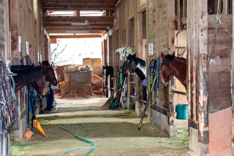 N.A.O.明野高原キャンプ場の馬小屋にいる馬