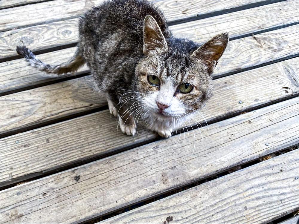 キャンプ場で飼われている可愛い子猫の写真