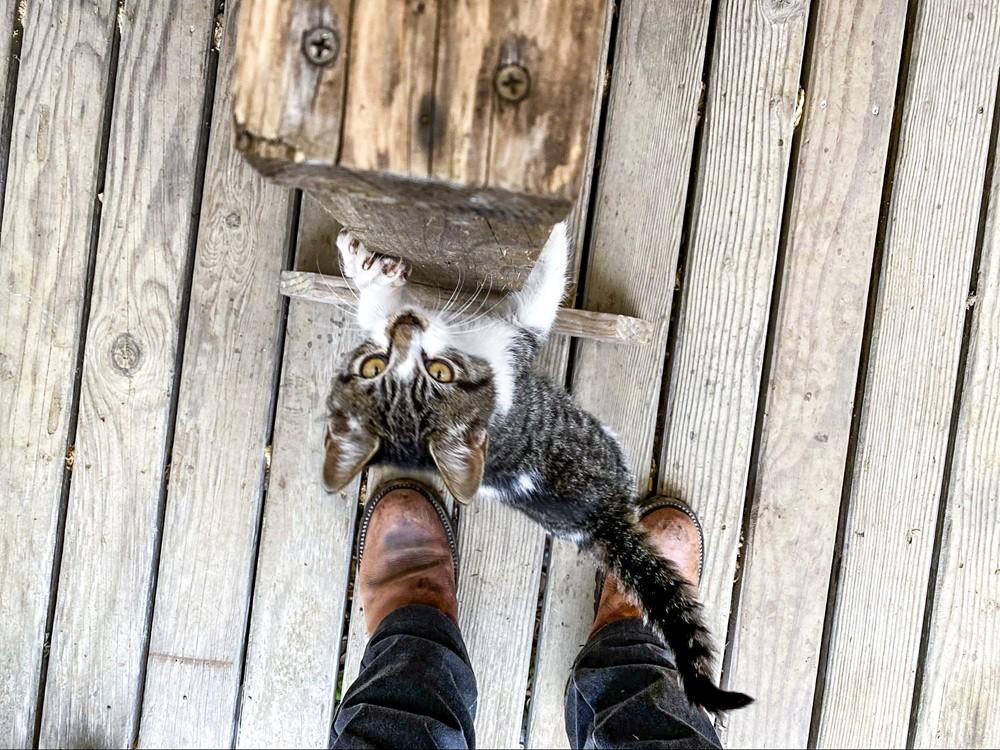 テーブルの足を上ってくる猫