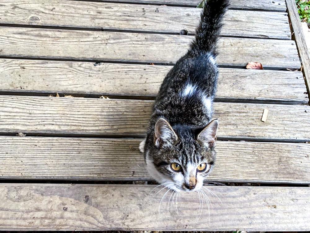 人懐っこい猫が寄ってくる