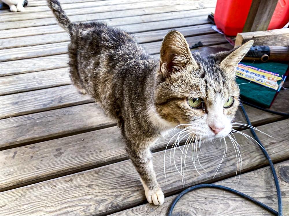 勝古沢キャンプ場の猫