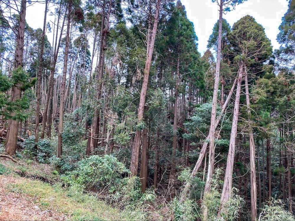 太い木が何本も倒れている