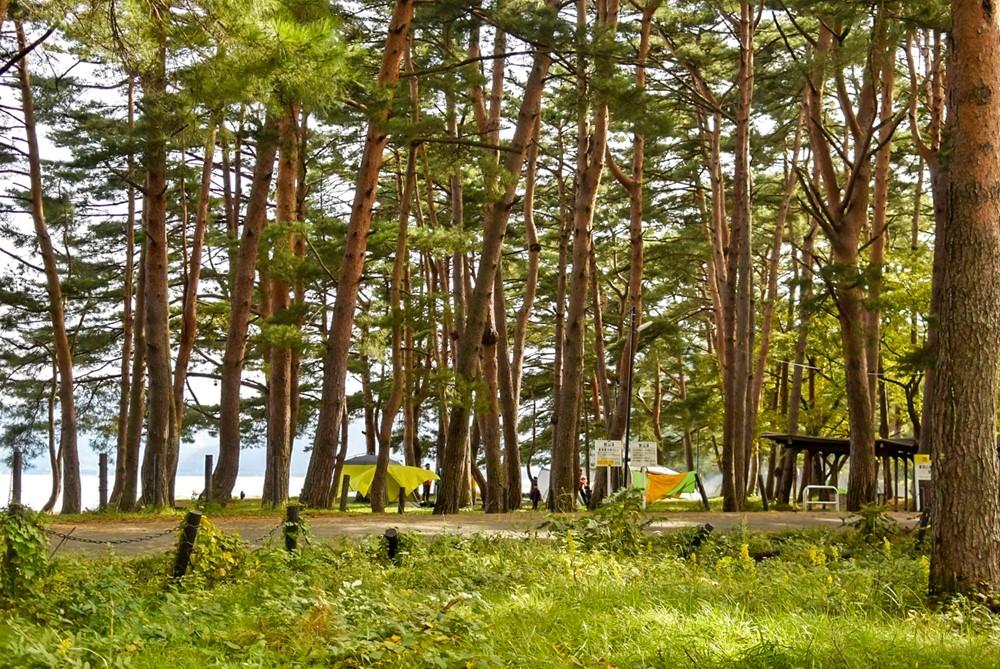 木が生い茂る林間キャンプ場