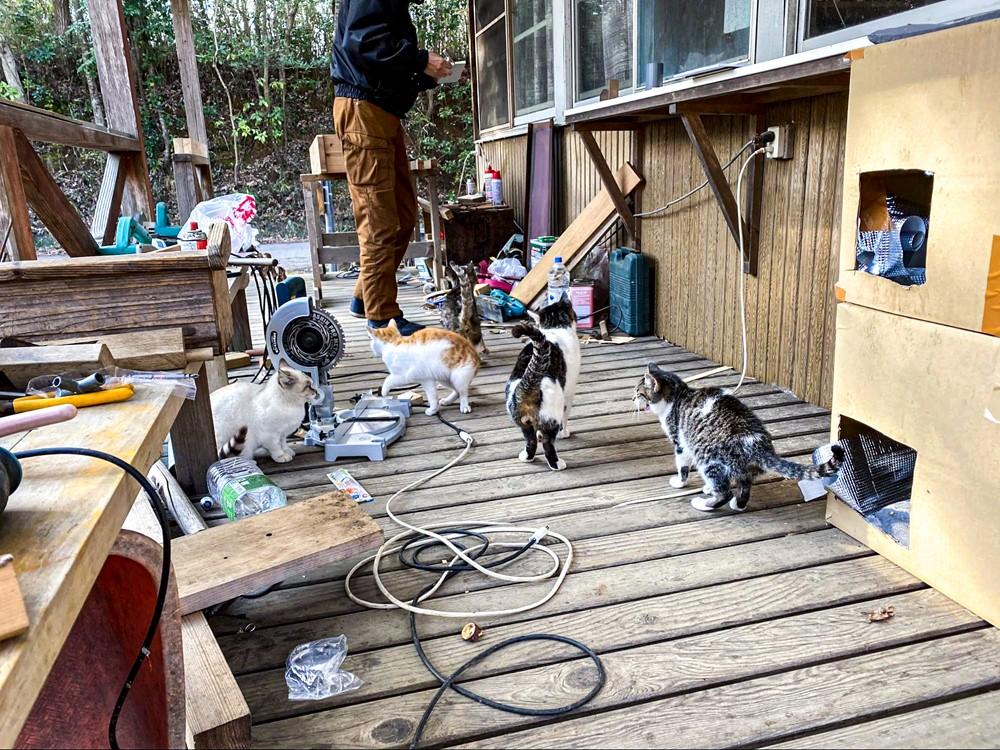管理人さんにベッタリの猫たち