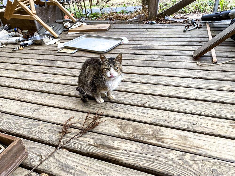 管理棟で飼われている猫