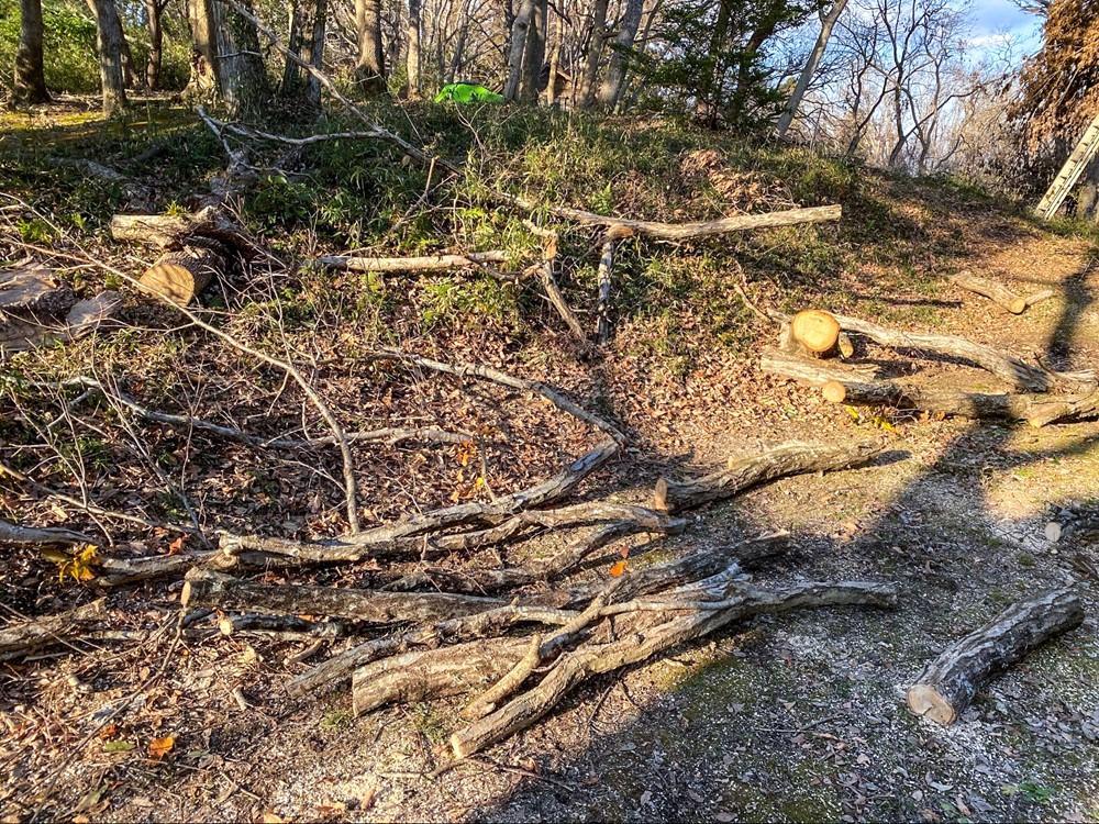 薪置き場に置かれた伐採された枝