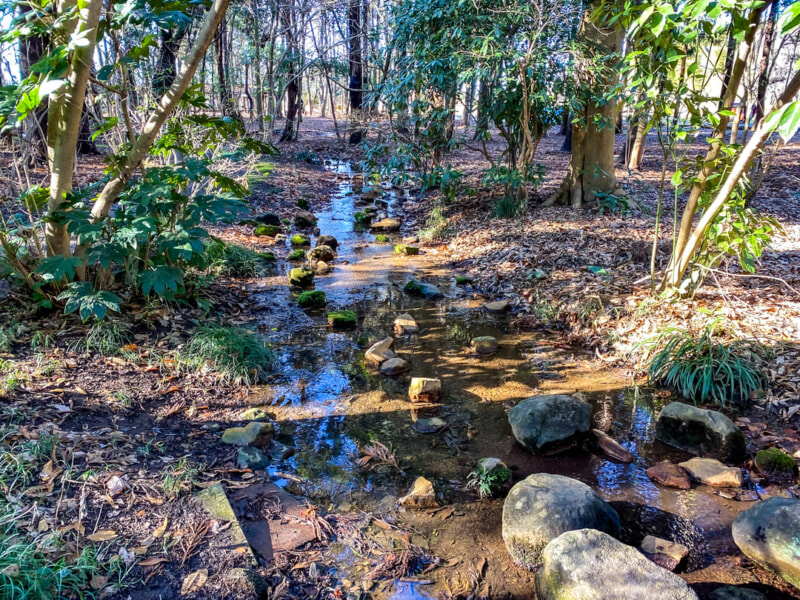 豊里ゆかりの森に流れる小川